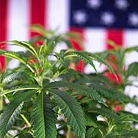CLE-TV: Cannabis and US Immigration